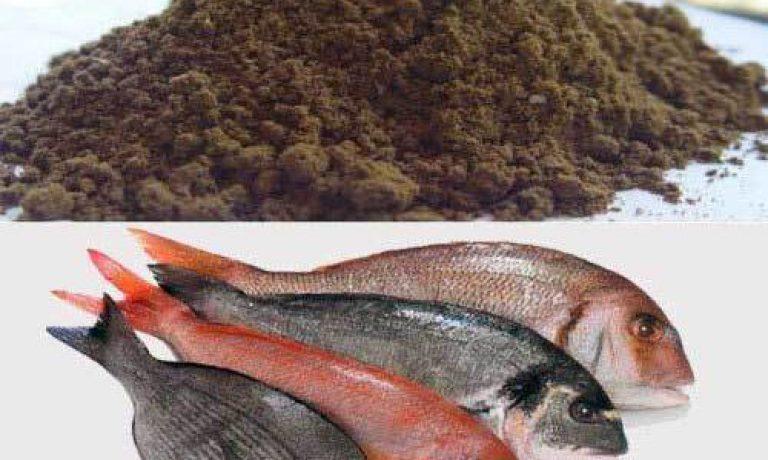 مرکز پخش انواع پودر ماهی انزلی