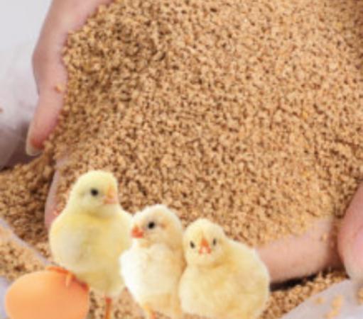 انواع کنسانتره مرغ گوشتی